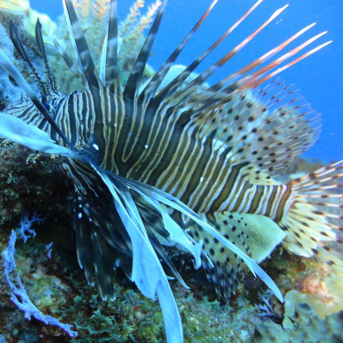 Ein gestreifer Fisch am Meeresgrund